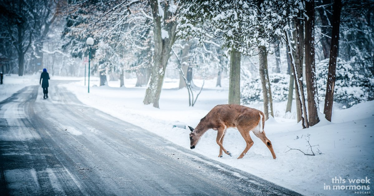 Episode #376 – The Deer Were His Mortal Enemies