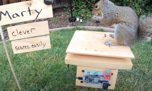 Latter-day Saint YouTuber Makes Obstacle Course for Bird Feeder-Robbing Squirrels